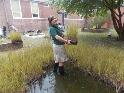 Ben Franklin High Schools students in Baltimore raise Bay Grasses in their school courtyard