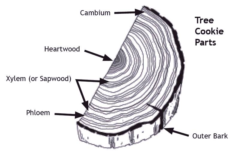Tree cross section label