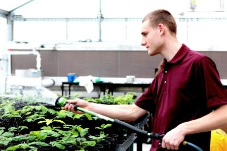 Carmichaels High School environmental science student Doug Kowalewski waters oak seedlings in the school's new greenhouse