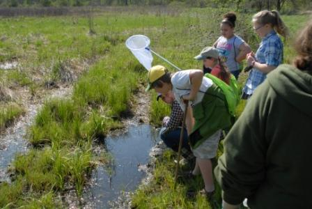 Students examining the wetlands