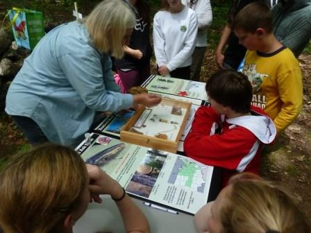 Students learn about invasive species