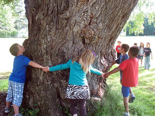 student holding hand in circle around tree