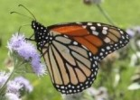 PLT Awards 28 Grants to Create Pollinator Gardens