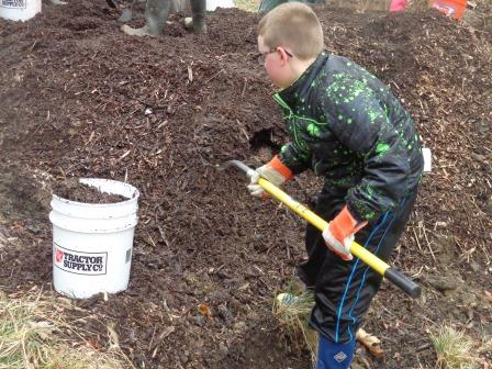 A boy spreads mulch