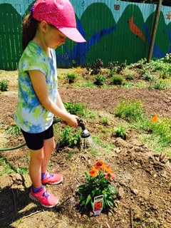 A young girl waters a plant she has just planted to attract Monarch butterflies to her school in West Virginia.