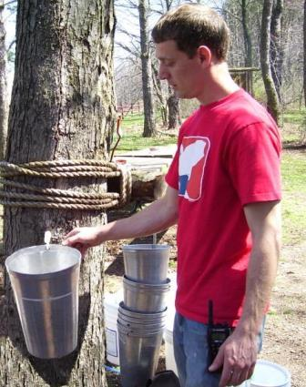 teacher tapping a maple tree
