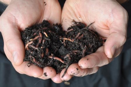earthworms in hand