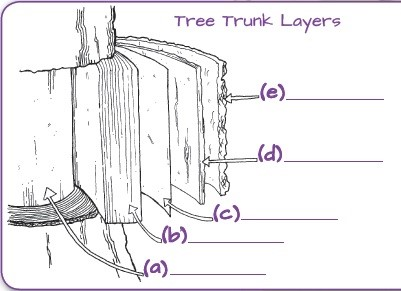 tree trunk layers