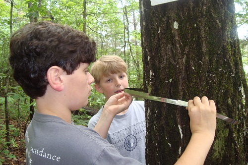 boys measuring tree in woods