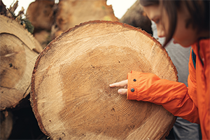 Girl pointing to center of tree cross section at rings