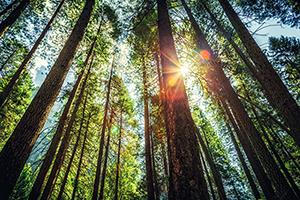 Sun shines through dense forest