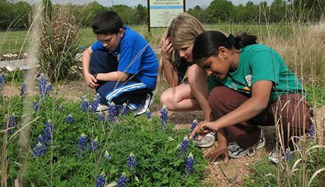 Children studying flowers