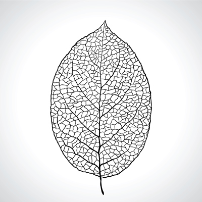 transparent-leaf-with-veins