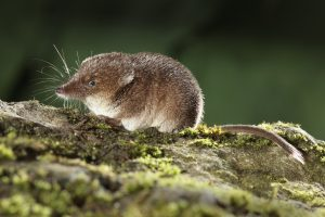 the forest of s.t. shrew nature family activity