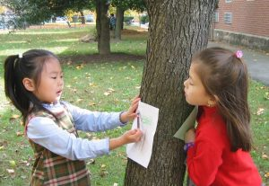 adopt a tree family activity in nature