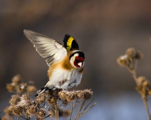 BirdandBurdock