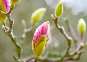 bursting buds nature activity for family