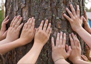 getting in touch withe tree nature activity family