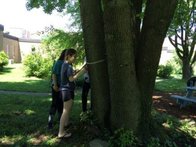 High school students measure trees