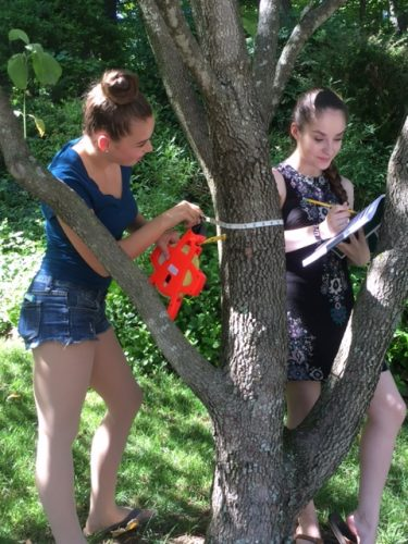 High school students measure the circumference of a tree on school grounds to determine the dollar value of the ecosystem services it provides.