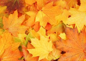 signs of fall family activity for nature