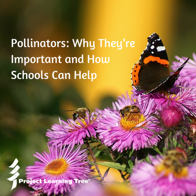 Pollinators: Why they're important and how schools can help
