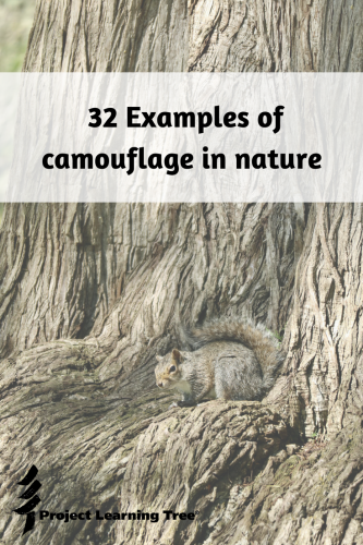 32 examples of camouflage in nature