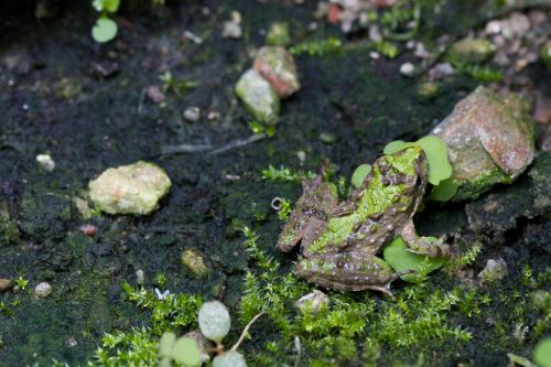 A toad blending in with its surroundings