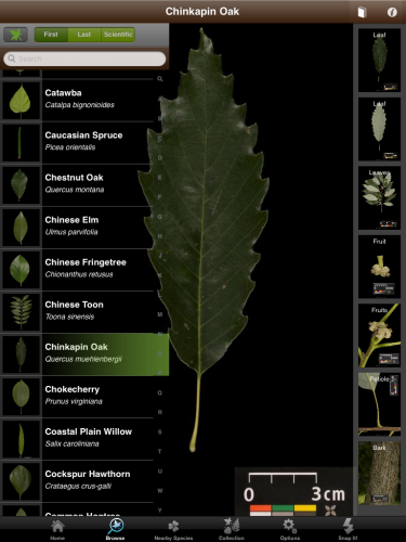 Leaf snap science app for middle and high school students