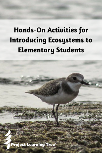 Hands-on activities for introducing ecosystems to elementary students