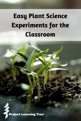 Easy plant science experiments for the classroom
