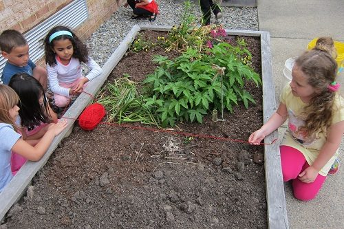 Elementary-students-measure-divide-school-garden-bed
