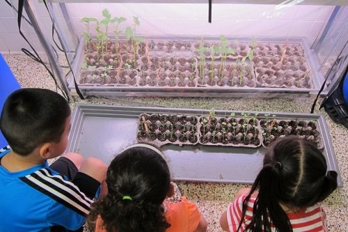 Elementary-students-nurture-seedlings