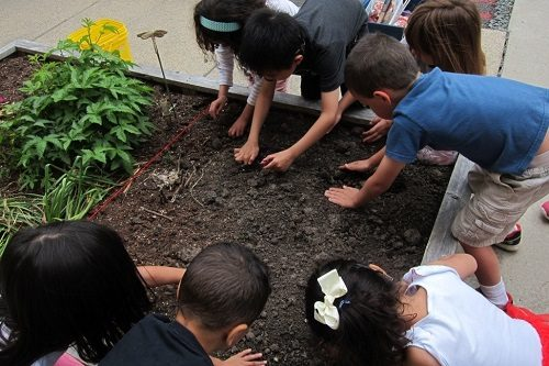 Elementary-students-plant-seeds-school-garden
