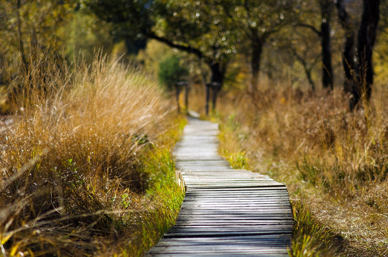 Trail in a park with trees and long grass