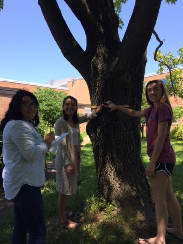 High school students at George C. Marshall high school in Falls Church, Virginia pilot test PLT's Teaching with i-Tree activities.