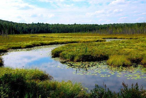 Wetlands-Algonquin-provincial-park-Canada