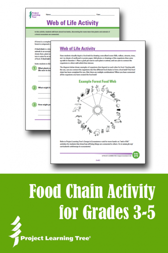 Food Chain Worksheet Download - Project Learning Tree