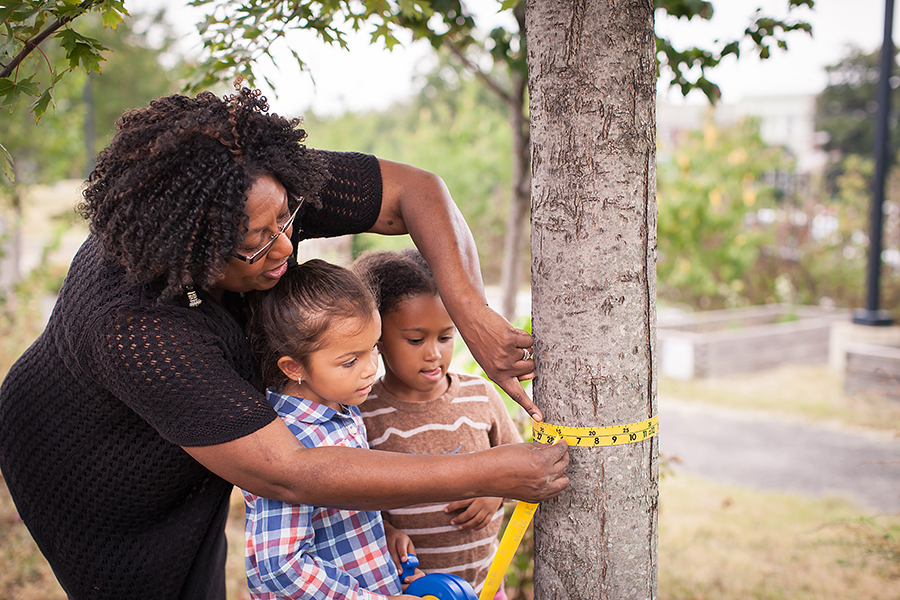 tree circumference family activity