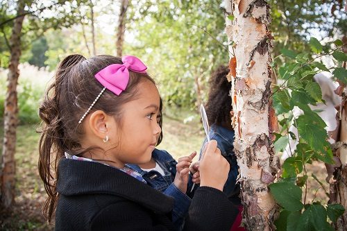 girl-looks-at-tree-bark-with-magnifying-glass