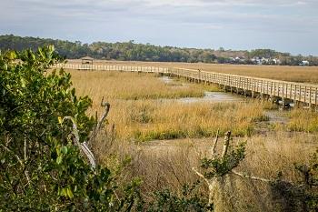marsh-grasses-South-Carolina-Lowcountry