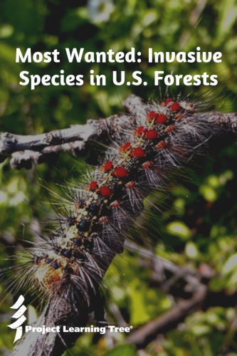 Most Wanted: Invasive Species in U.S. Forests