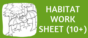free bat habitat worksheet for ages 10 and up