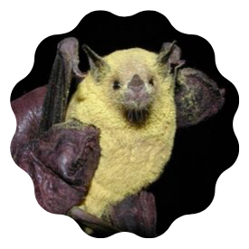 bat covered in pollen
