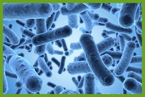 Bacteria, a bioremediation decomposer
