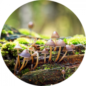Decomposer, fungi