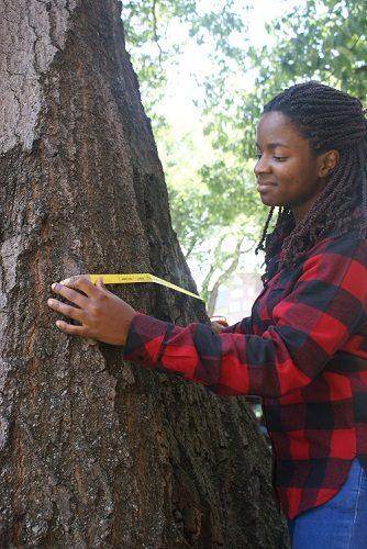 African American woman outdoors measuring a tree