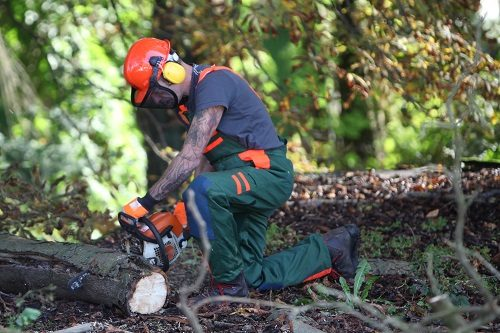 A logger using a chainsaw to saw tree trunk. He is wearing protective clothing.