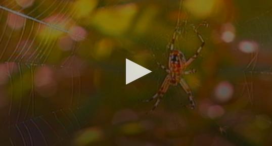 PBS food web video