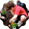 young child planting flowers in soil